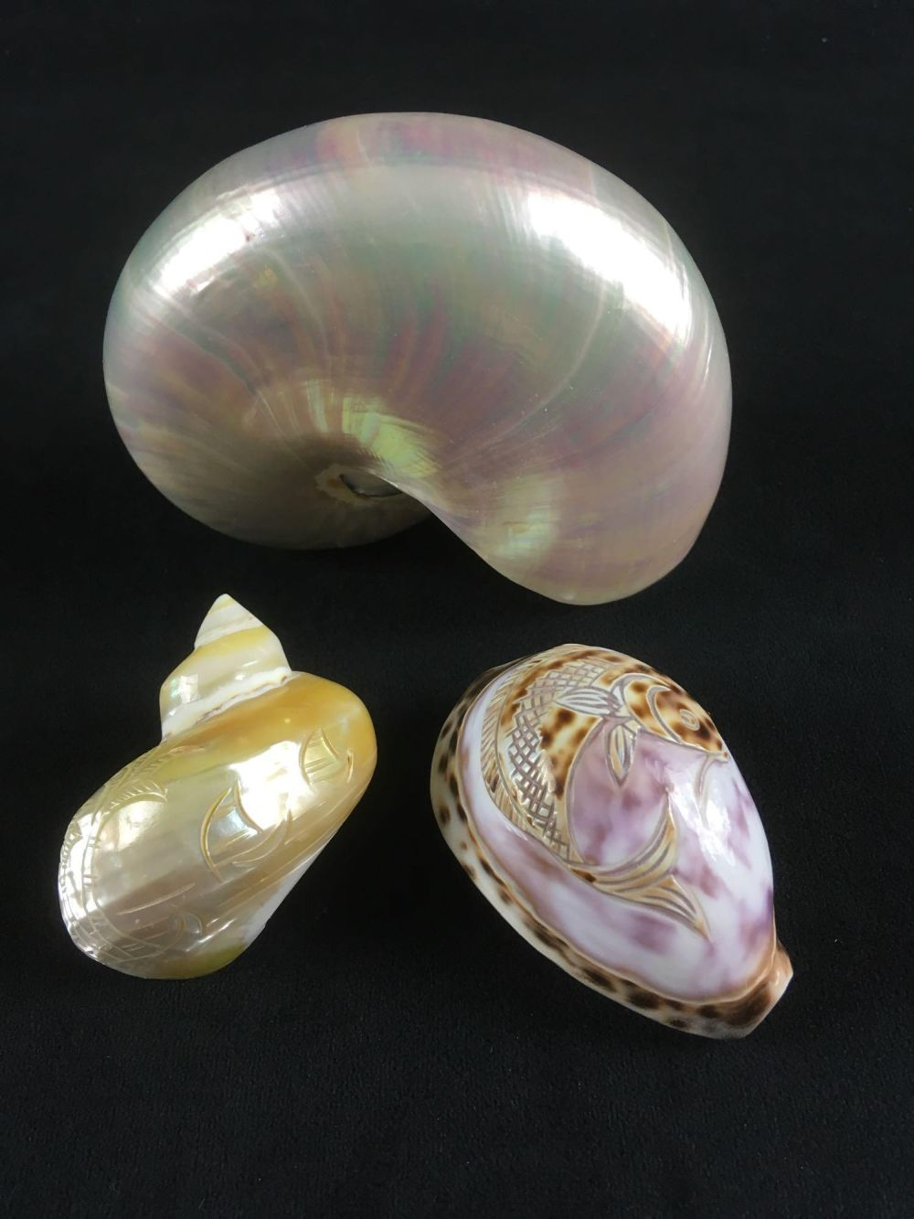 Lot 947: Nautilus Shell and 2 Hand Carved Shells