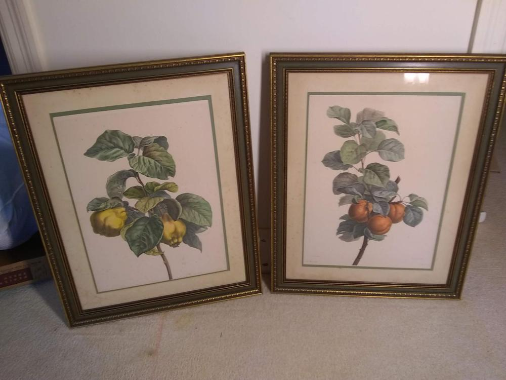 Pair Framed Fruit Prints