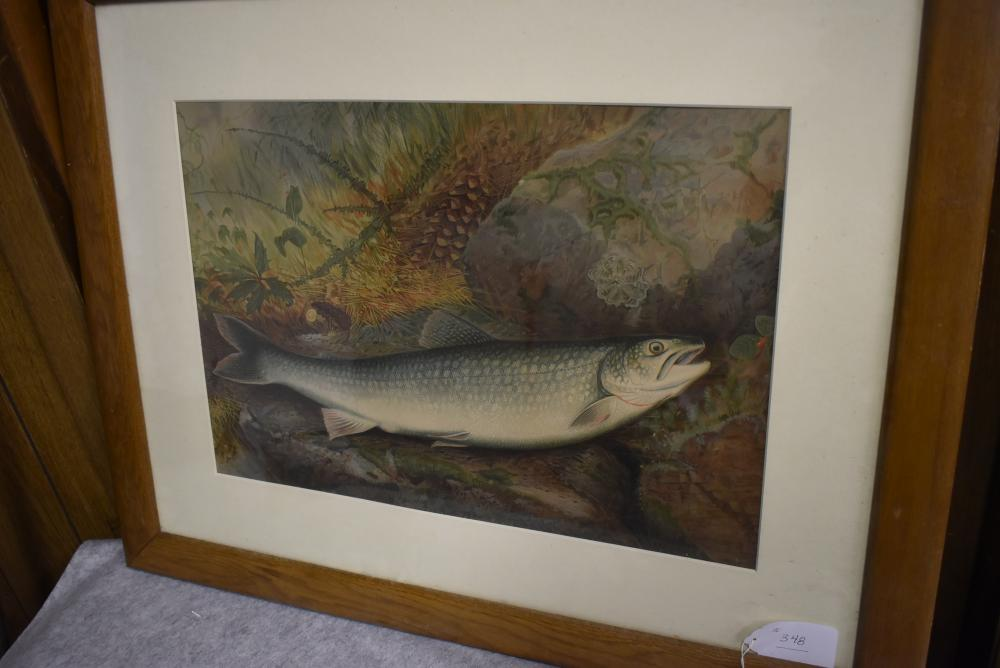 """Framed Salmon Print in Color – Signed: S. A. Kilbourne – Framed Measurements 23½"""" x 30"""" – Image Size 19½"""" x 13½"""" – Frame Shows Edge Roughness"""