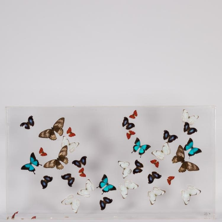 Butterfly Display in Lucite - Signed