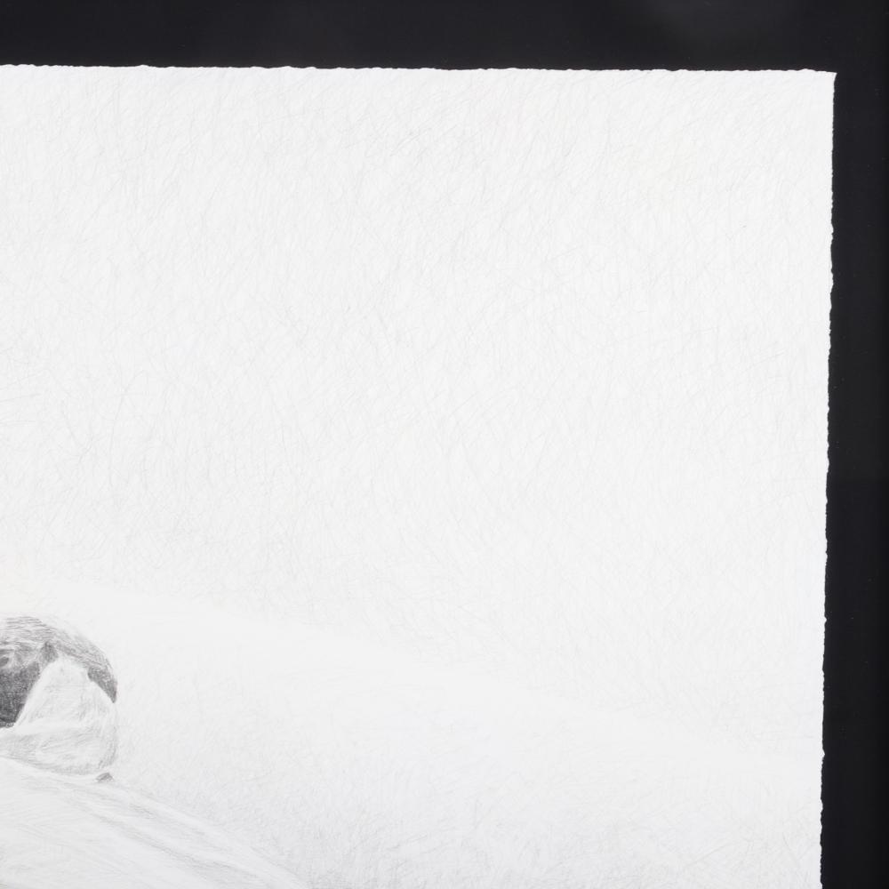 "Ethan Murrow, (American, b.1975), Reversing Extinction IV, 2005, graphite on paper, 40""H x 40""W (image), 48""H x 48""W (frame)."