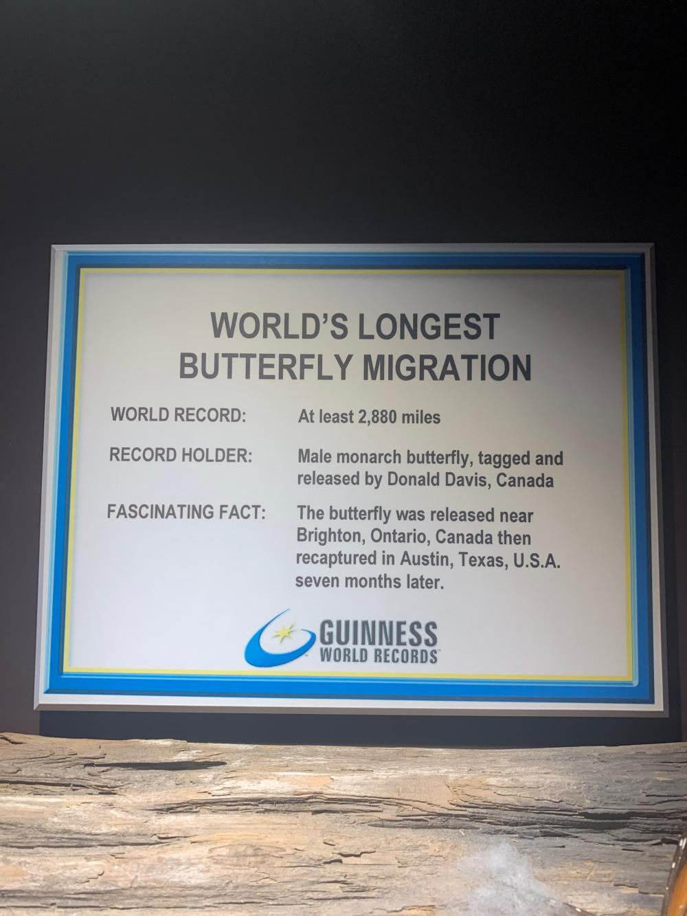 Guinness Museum Bugs Display Taxidermy Specimens Beetles Contents Only