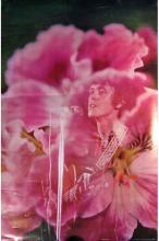Donovan - 1967 Sixties Poster