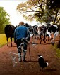 Gregory Moore (20th Century) - MILKING TIME, Oil