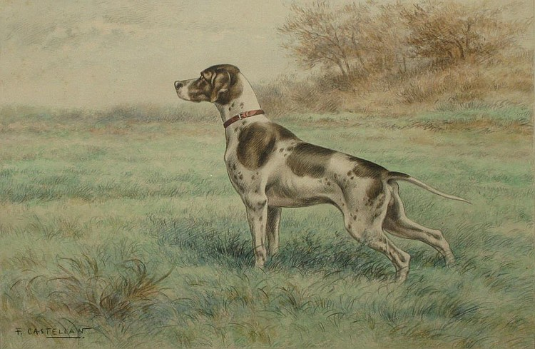 F. CASTELLAN  Braque à l'arrêt, Pointer (breed of dog developed as a gun dog). Watercolour signed on the lower left. 34,5 x 50,5 cm.