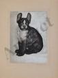 BANDO Toshio, 1895 -1973 Bouledogue eau-forte en couleurs sur papier soie nacré appliqué sur papier (infimes rousseurs), signé en bas à droite,  33 x 24,5 cm.