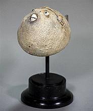 A puffer fish specimen Mounted on an ebonised display plinth.  24 cm high overall.