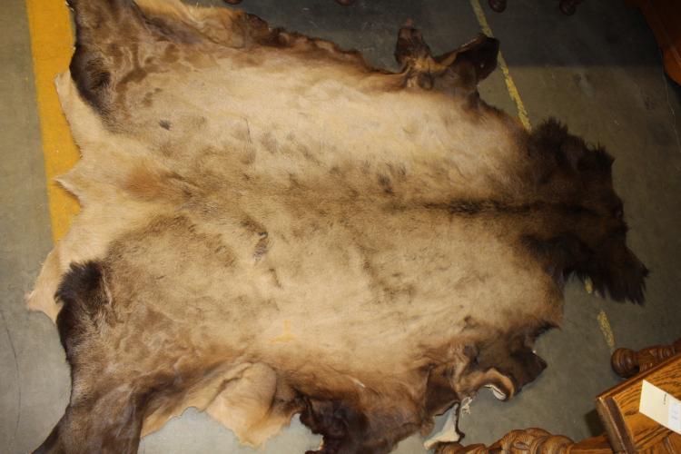 Large Vintage Bear Skin Rug