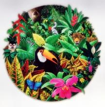Charles Lynn Chick Bragg   Toucan In Rain Forest