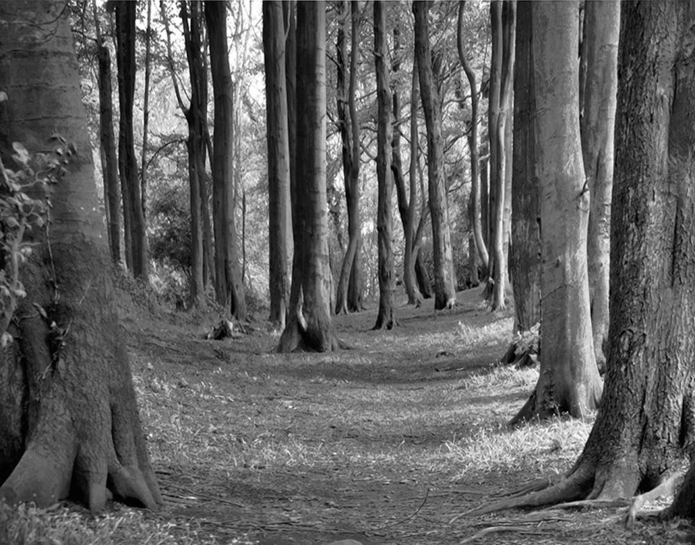 Hal Halli - In The Wizard's Woods