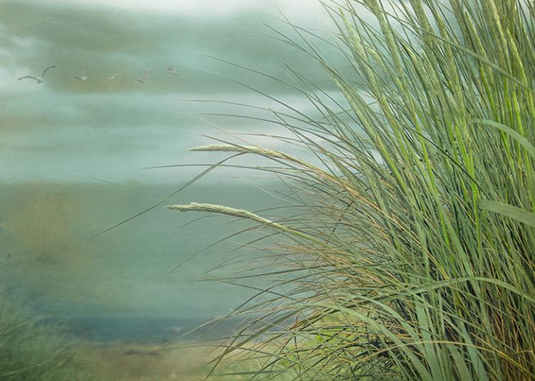 Look To The Sea By Hal Halli