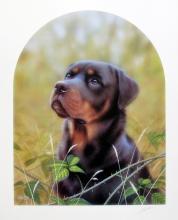 John Silver  Rottweiler Dog