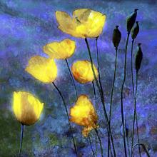 Poppies In Night Sky By Hal Halli