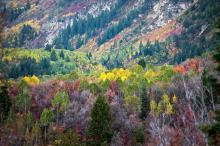 Fall Colors By Scott Barlow