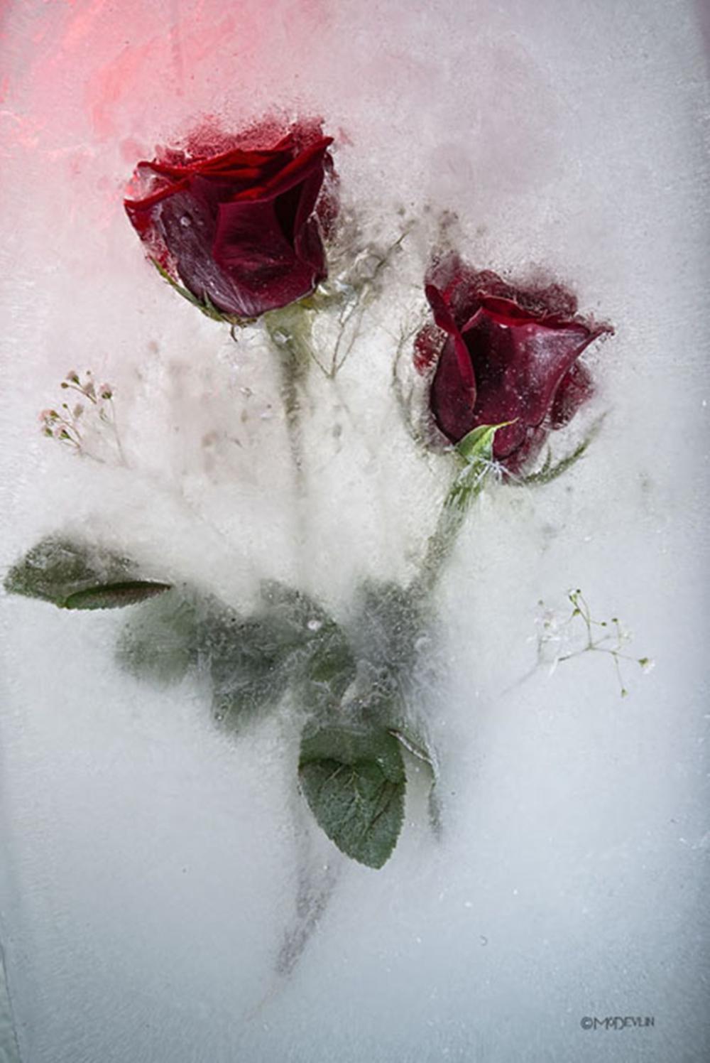 Mo Devlin - Twin Roses