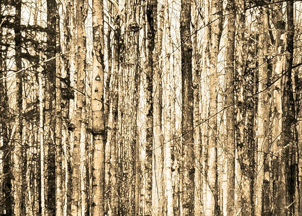 Hal Halli - Bare Trees