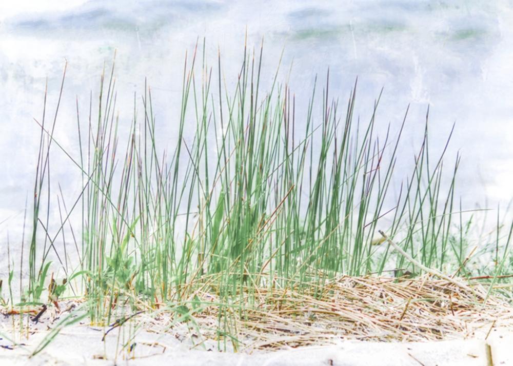 Hal Halli - Grass On The Beach