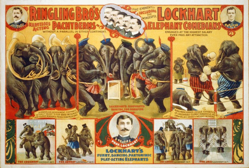 HOLLYWOOD PHOTO ARCHIVE RINGLING BRO'S MARVELOUS ACTING PACHYDERMS - LOCKHART ELEPHANT COMEDIANS - 1899