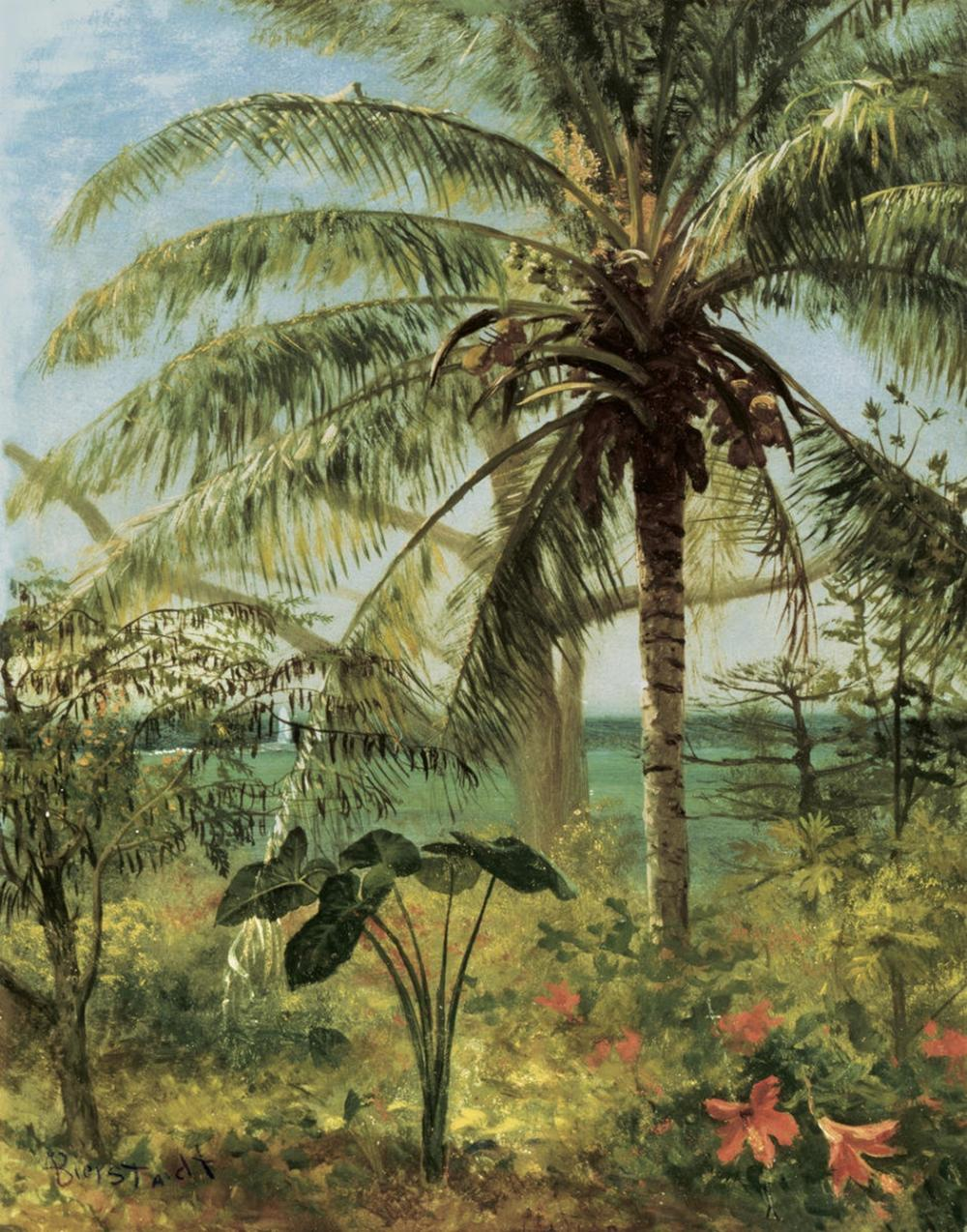 ALBERT BIERSTADT PALM TREE, NASSAU 1892