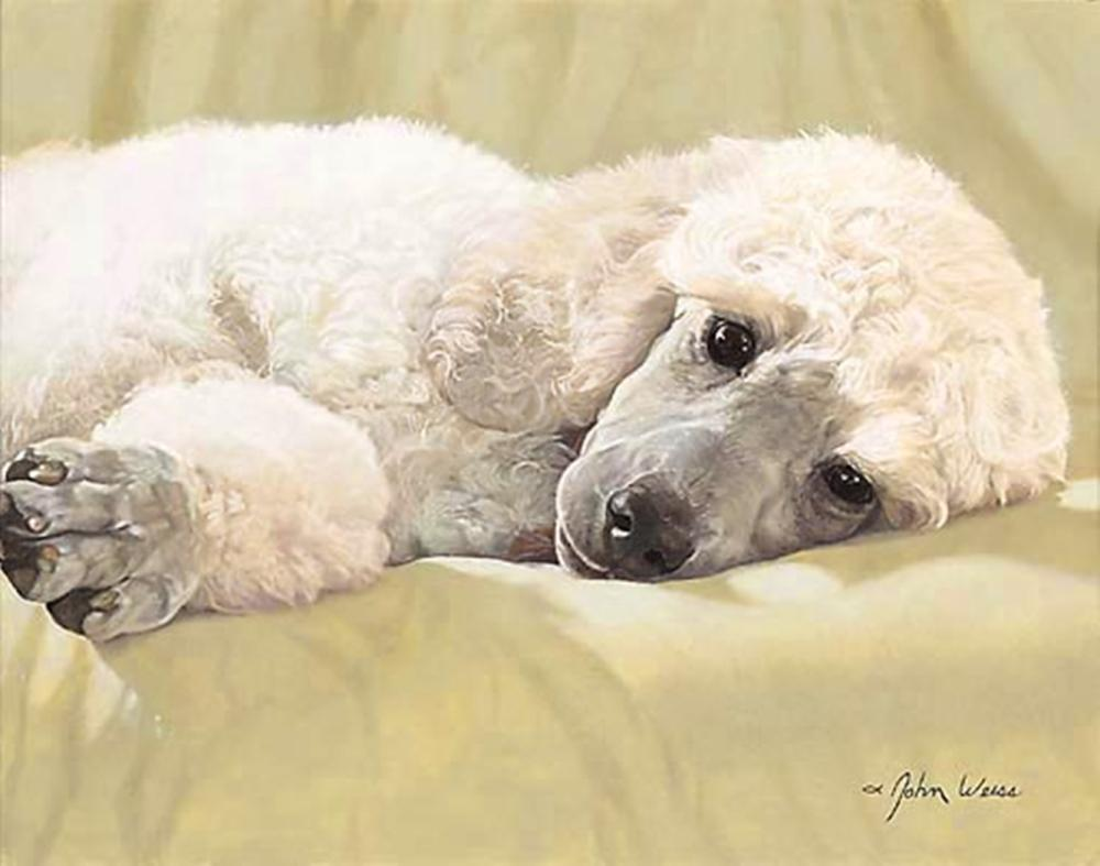 John Weiss…Best Loved Breeds: White Standard Poodle