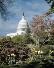 CAROL HIGHSMITH - U.S. CAPITOL, WASHINGTON, D.C. NUMBER 3 - VINTAGE STYLE PHOTO TINT VARIANT