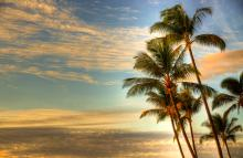 Palm Trees Sunrise Whaler Hawaii. A Gallery Wrapped Canvas By Kelly Wade