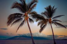 Maui Palms At Sunset Canvas By Kelly Wade