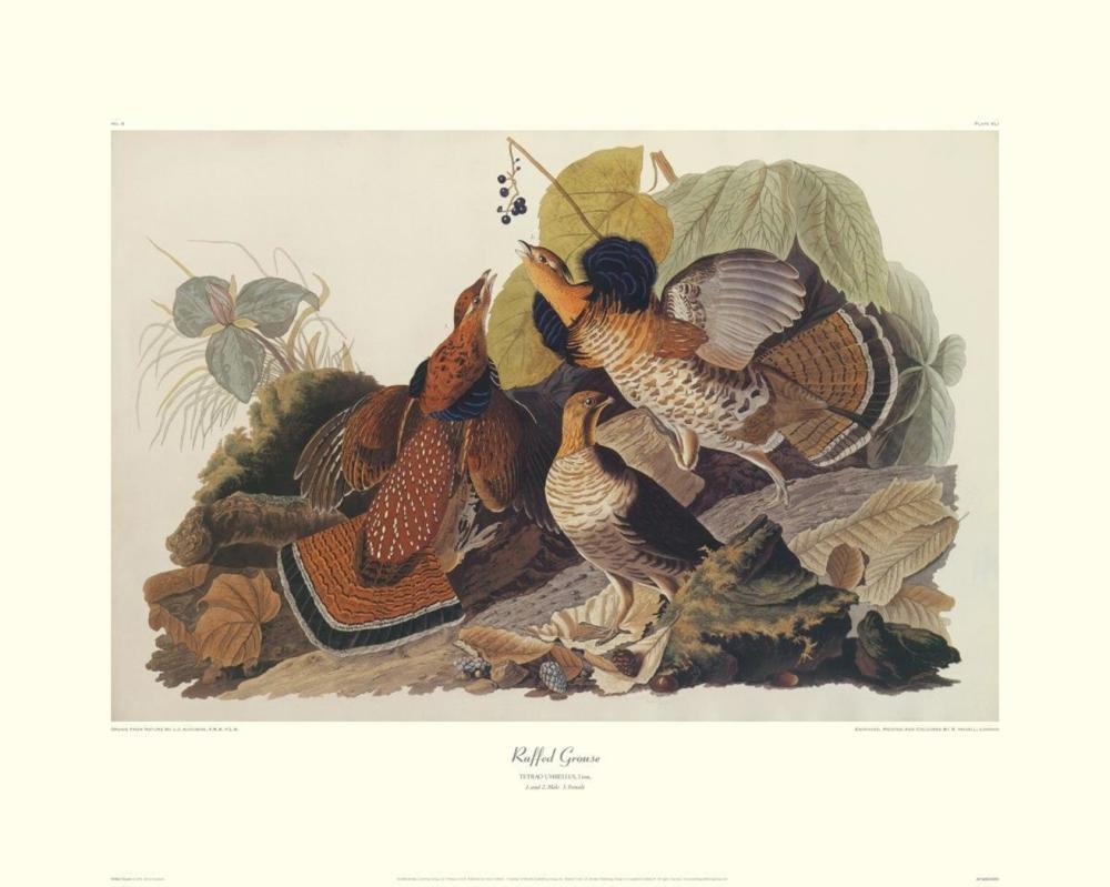 JOHN JAMES AUDUBON - RUFFED GROUSE (DECORATIVE BORDER)