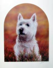 John Silver  West Highland Terrier