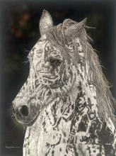 Judy Larson - American Horse