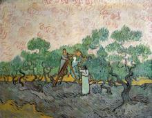 Vincent Van Gogh - Women Picking Olives