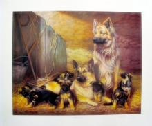 Nigel Hemming  German Shepherd Flock Dogs