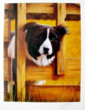 John Silver  The Lookout  Border Collie