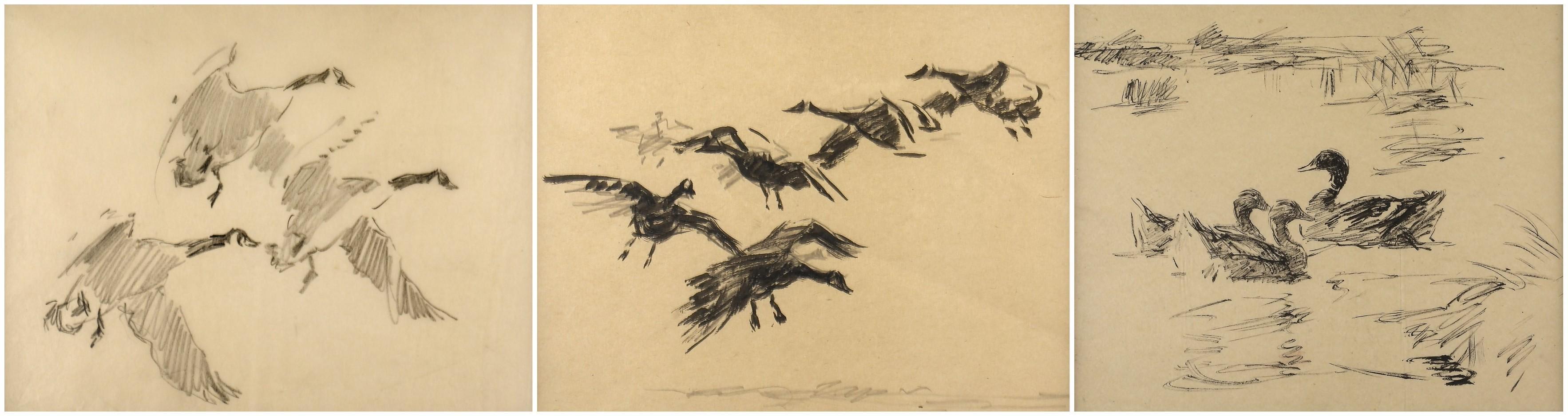 Frank Hoffman, Three Drawings of Birds