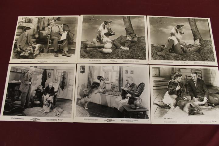 6 Movie Still Photos - Lassie Come Home 8x10