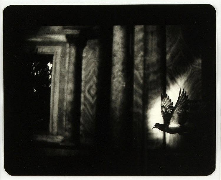 ARR - Property of a lady - Giacomo Brunelli (b.1977) - 'BIRD IN VENICE' (2006) (from The Animals I series) - gelatin sil