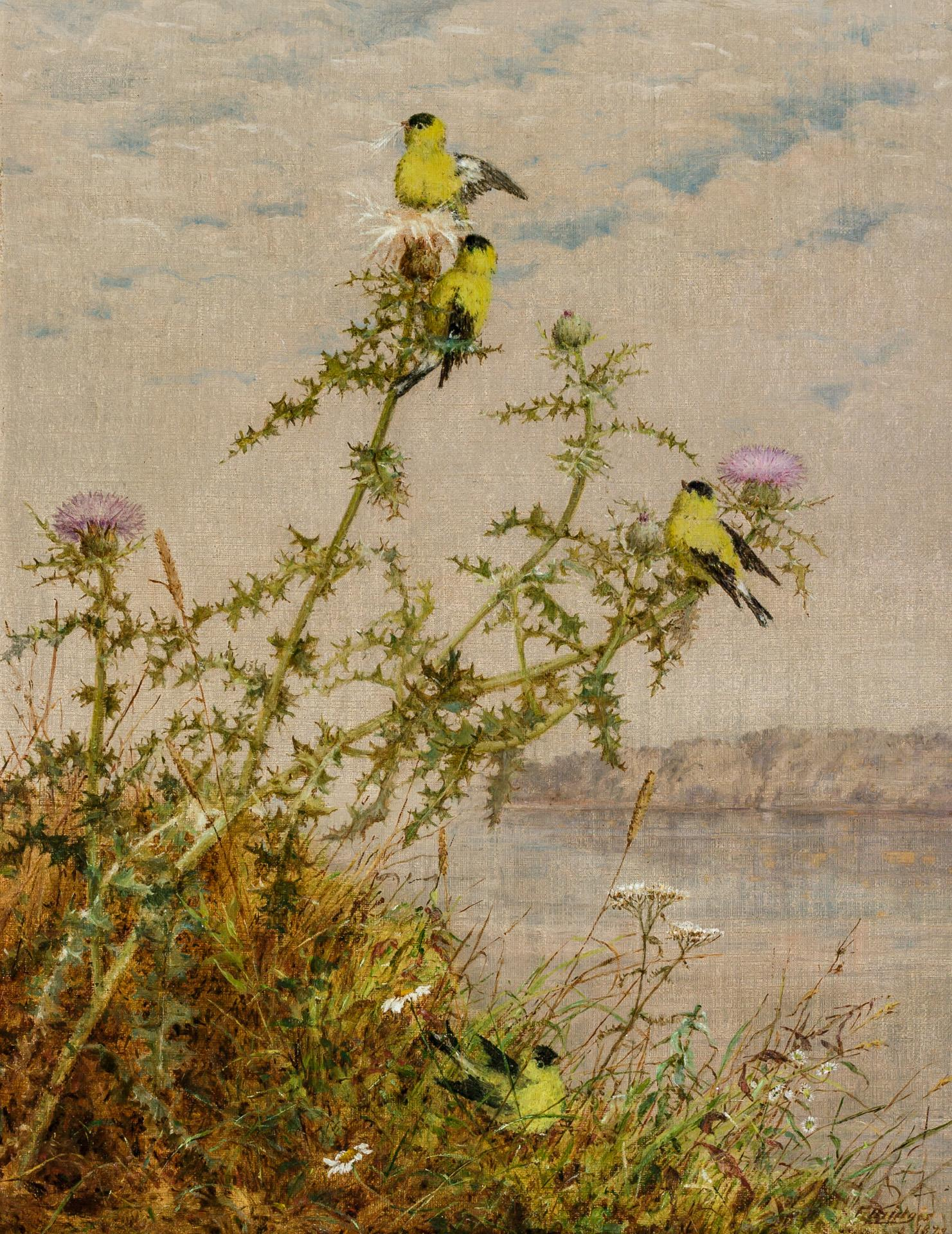 """FIDELIA BRIDGES, American (1834-1923), Goldfinches and Thistle, oil on canvas, signed and dated lower right """"F. Bridges 1873"""", 14 x..."""