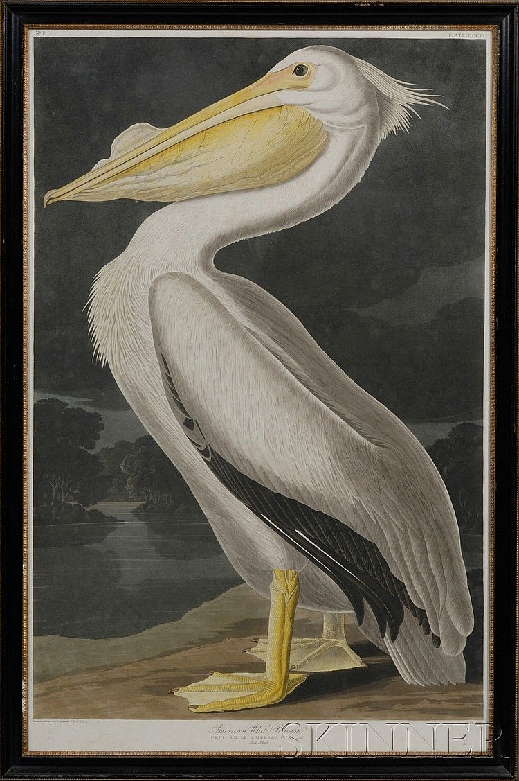 Audubon, John James (1785-1851), American White Pelican, plate CCCXI from Birds of America, engraved, printed, and hand-colored by R...