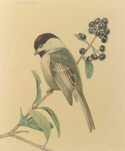 Charles Emile Heil (American, 1870-1953), Chickadee, Signed