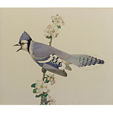 Charles Emile Heil (American, 1870-1953), Bluejay in Song. Signed