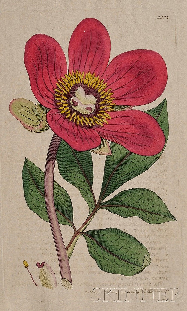 (Botanical), Sowerby, James (1757-1822) & Smith, Sir James Edward (1759-1828), English Botany; or, Coloured Figures of British Plant...