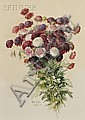 Paul De Longpre (French/American, 1855-1911) Bouquet of Chrysanthemums Signed, inscribed, and..., Paul DeLongpré, Click for value