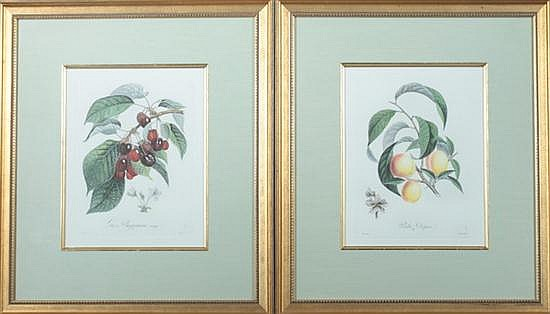 FOUR FRENCH HAND-COLORED ENGRAVINGS OF FRUIT. - 13 1/2 in. x 10 1/2 in., sight size.