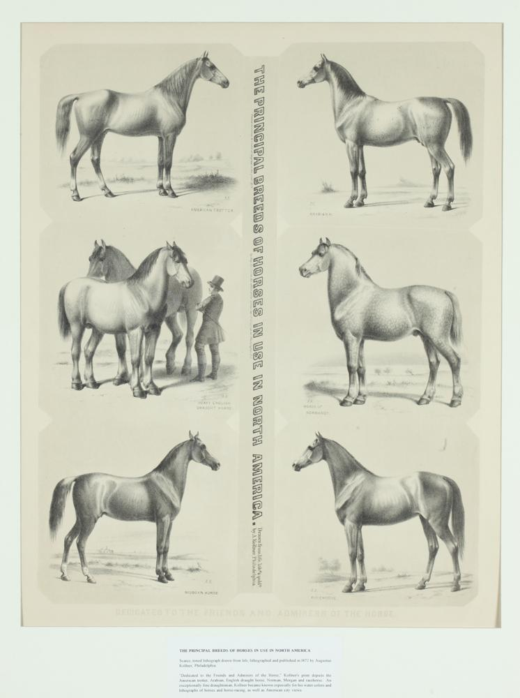 19TH CENTURY TINTED LITHOGRAPH, THE PRINCIPAL BREEDS OF HORSES IN USE IN NORTH AMERICA, AFTER AUGUSTUS KOLLNER, Augustus Kollner (Germa