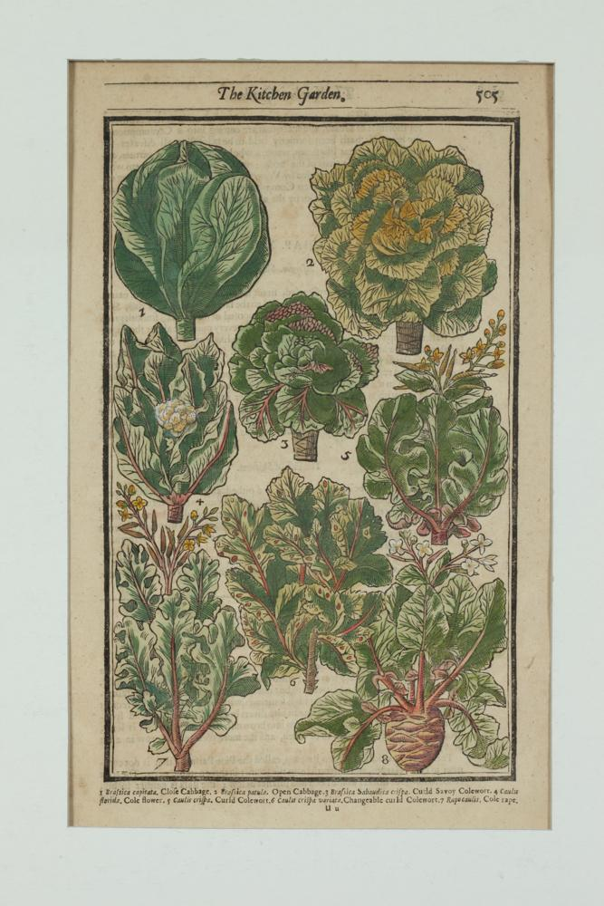 COLLECTION OF FOUR 17TH CENTURY GARDEN WOODCUT PRINTS FROM JOHN PARKINSONS' PARADISI IN SOLE PARADISUS TERRESTRIS. 1656 Edition. Print