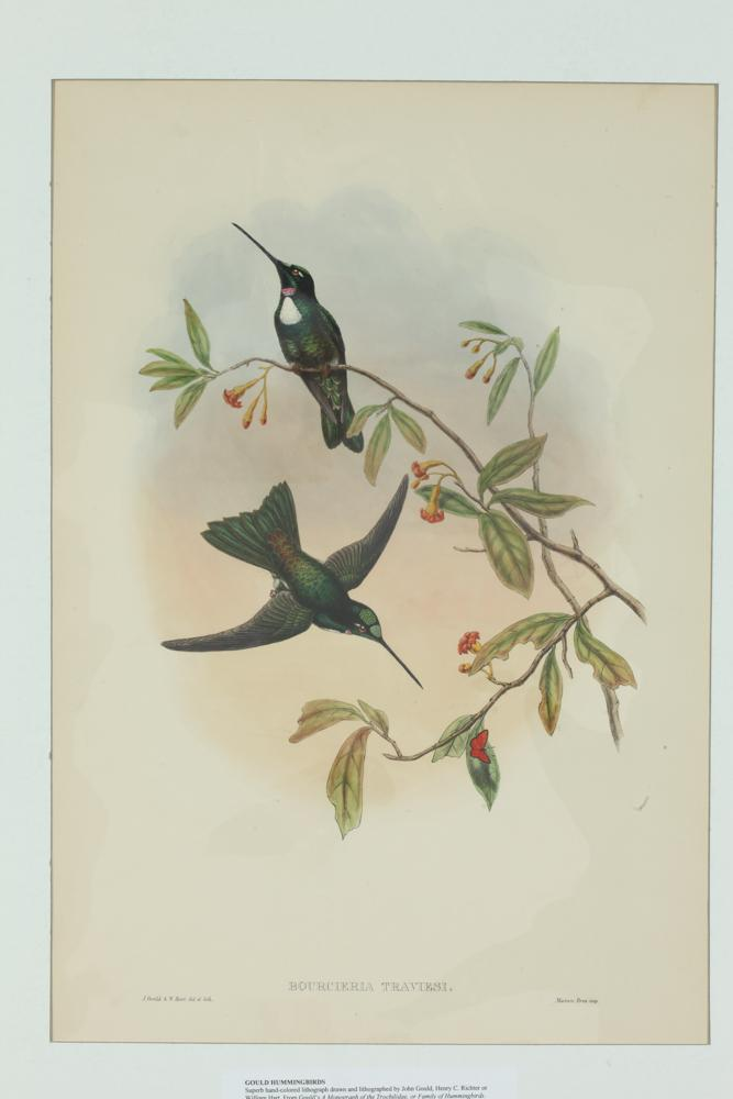 TWO 19TH CENTURY JOHN GOULD LITHOGRAPHS FROM A MONOGRAPH OF THE TROCHILIDAE, FAMILY OF HUMMINGBIRDS, Published London, 1849-60 (87).