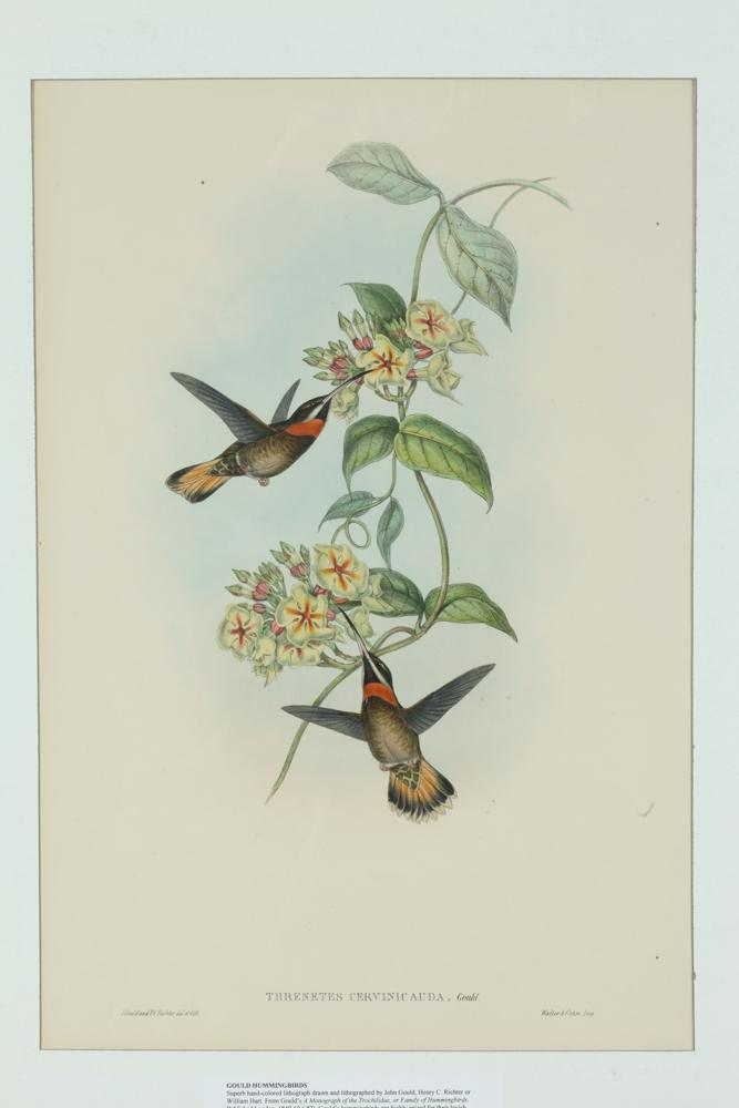 TWO 19TH CENTURY JOHN GOULD LITHOGRAPHS FROM A MONOGRAPH OF THE TROCHILIDAE, FAMILY OF HUMMINGBIRDS. Published London, 1849-60 (87).