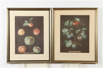 TWO FRAMED 19TH CENTURY, OF THE PERIOD, GEORGE BROOKSHAW AQUATINTS OF FRUITS FROM POMONA BRITANNICA. George Brookshaw (British, 1751-18