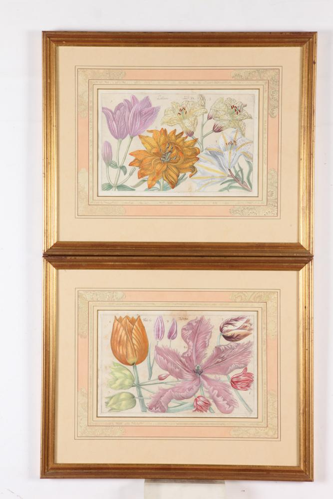 PAIR OF FRAMED 18TH CENTURY, OF THE PERIOD, FILIPPO ARENA BOTANICAL ENGRAVINGS DEPICTING TULIPS & LILLIES, Circa 1767, From the Nature