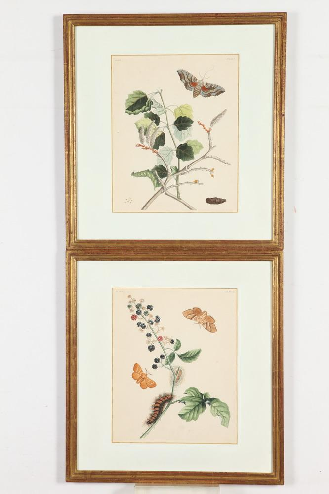 TWO LAST QUARTER 18TH CENTURY, FRAMED, OF THE PERIOD, ENGRAVINGS DEPICTING INSECTS FROM ENGLISH MOTHS & BUTTERFLIES, Published Benjamin